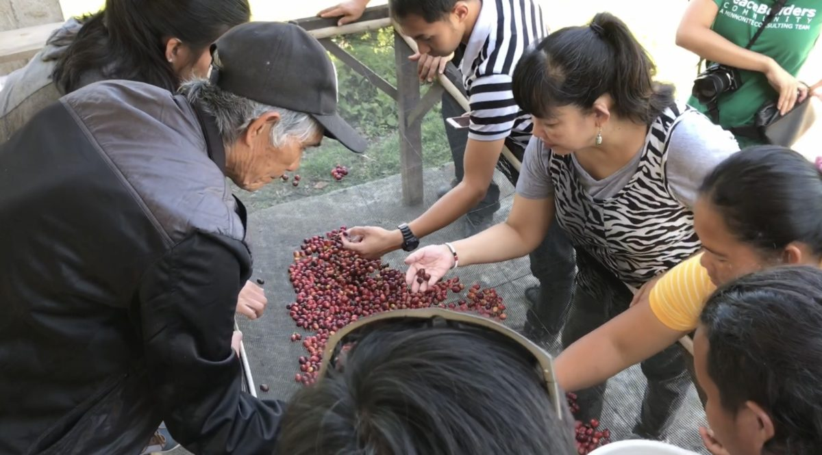 Inspecting coffee beans